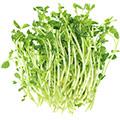 image of vitamin E