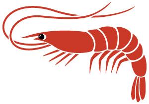 Imagen de krill