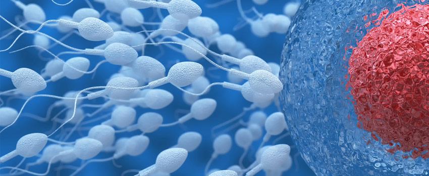 Óvulo con espermatozoides