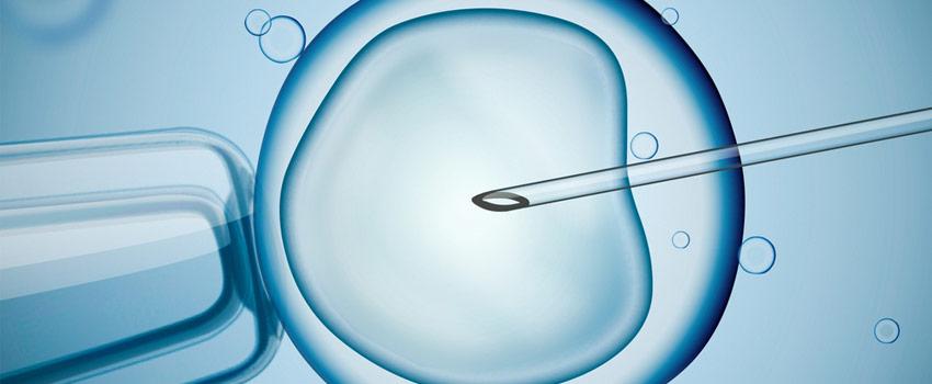 Ejemplo de fecundación in vitro
